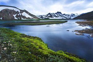 IJslands mos