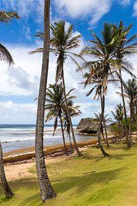 Kust Barbados van