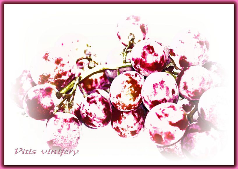 Rote Weintrauben van Rosi Lorz