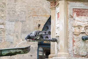 Stadsduif die zijn dorst lest aan de fontein op het plein in Rothenburg ob der Tauber van Jani Moerlands