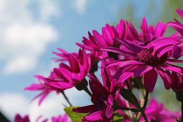 paarse bloemen von Serena Kok