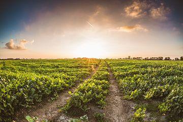 Boerderij zonsondergang