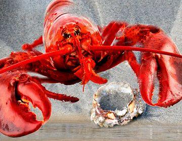 Roter Hummer am Strand mit einer Krabbe von Christine Vesters Fotografie