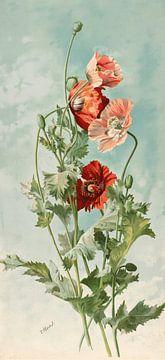 Mohnblumen, Thaddeus Welch