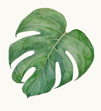 Philodendron von Studio Heyki