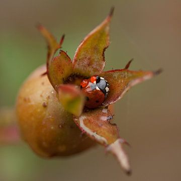 Ladybug sur Ada Zyborowicz