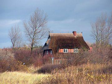 Dünenlandschaft an der Ostsee in Wustrow sur Renate Knapp
