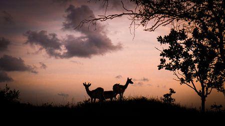 Sundown von Christophe .