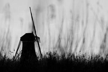 Mühle hinter dem Schilf von Martijn van Doorn