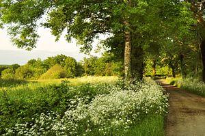 Landweg met  bomen en Fluitekruid