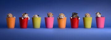 Kittens Katten Poezen van Patrick Reymer