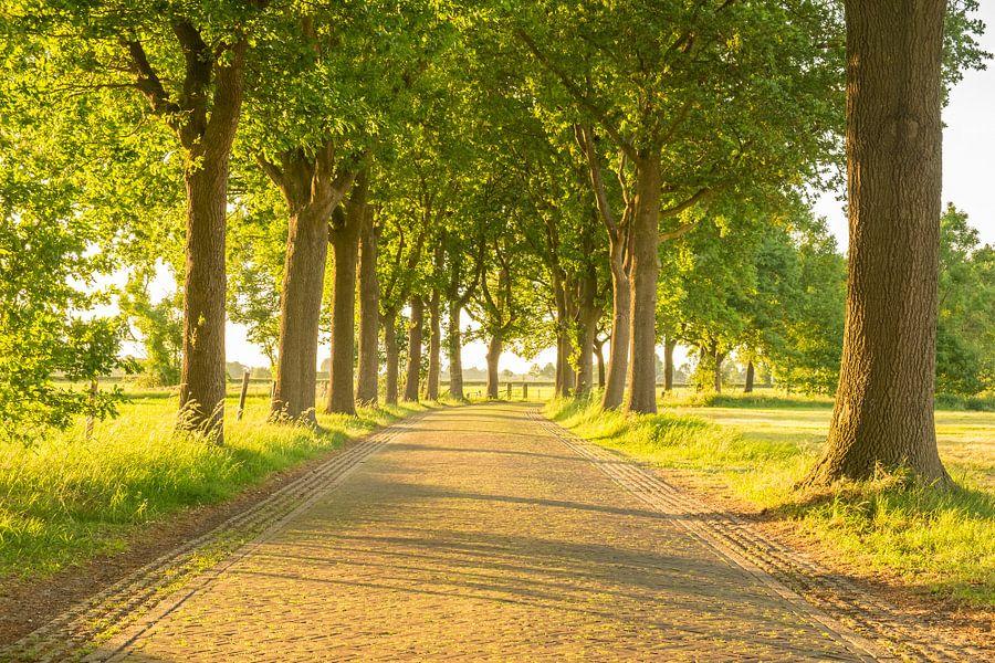 Zomeravond zonlicht over een landweggetje met bomen van Sjoerd van der Wal