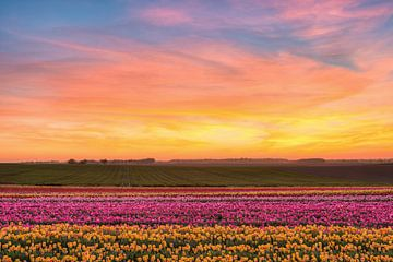 Sonnenuntergang im Tulpenfeld von Michael Valjak