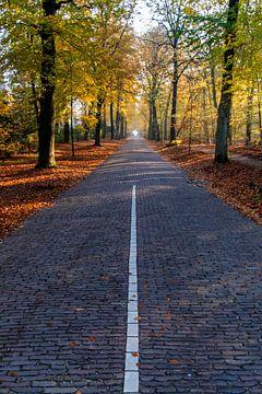Oud Blaricumerweg in herfstbloei op een zonnige dag van Ramon Van Gelder