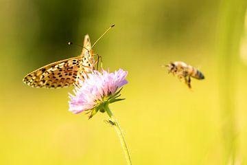 Dit is het verhaal van de vlinder en de bij... von Patricia Dhont