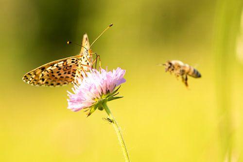 Dit is het verhaal van de vlinder en de bij...