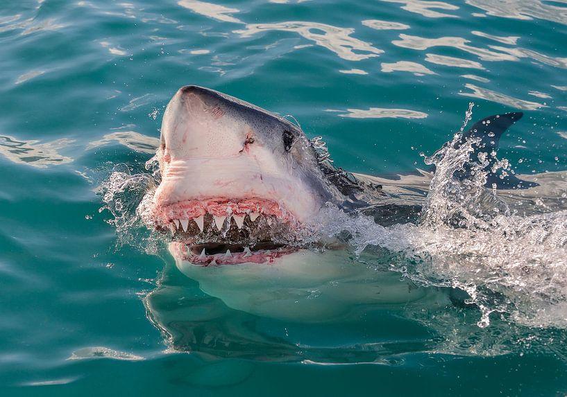 Great White Shark (Witte Haai) van Harry Eggens
