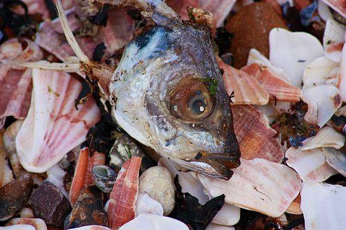 Vissenkop von Heidie Mulder