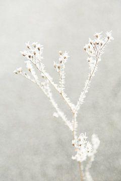 Winter von Chantal Cornet