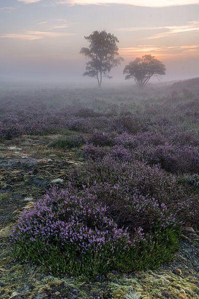 Before sunrise van Jan Koppelaar