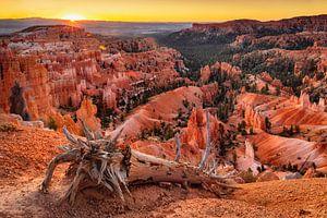 Bryce Amphitheater bij zonsopgang, Bryce Canyon, Utah, VS van Markus Lange