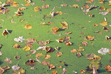 Herfstbladeren drijven op het water in de zon van Nicolette Vermeulen