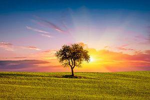 Toscane Zonsondergang Italië van