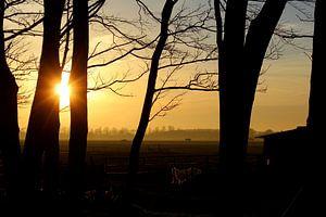 Door de bomen de zonsondergang zien van