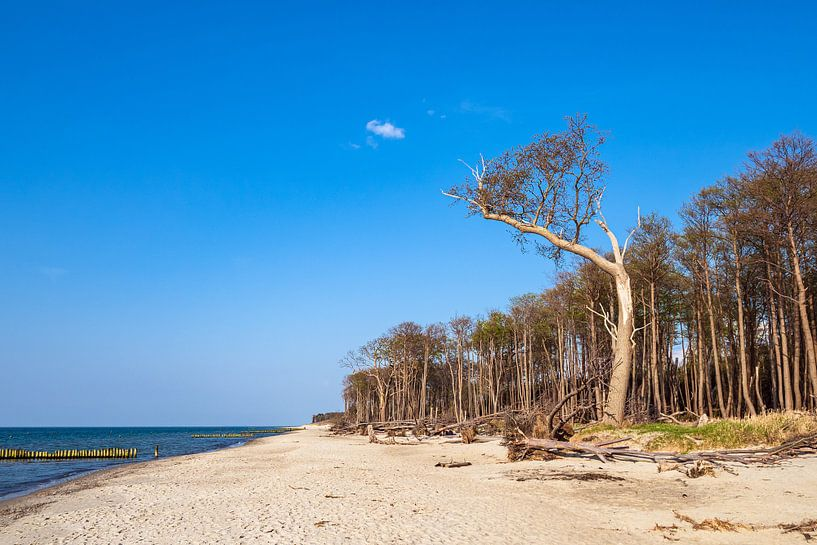 Strand an der Küste der Ostsee bei Graal Müritz von Rico Ködder