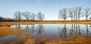 Nackte Bäume, die sich in einem kleinen Teich spiegeln. von Ruud Morijn