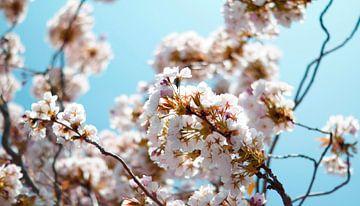 Lente bloesem van angela de baat