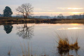 Baum zum Teich von Johan Vanbockryck