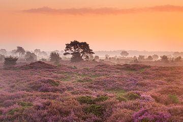 Bloeiende heide met mist aan de horizon van Karla Leeftink