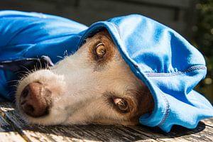 Dog in da hood