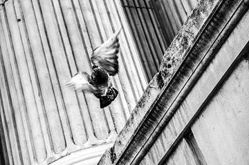 Vliegende duif in Londen van Barbara Koppe
