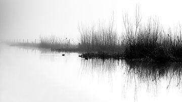 Mist van Dianthe Forkink