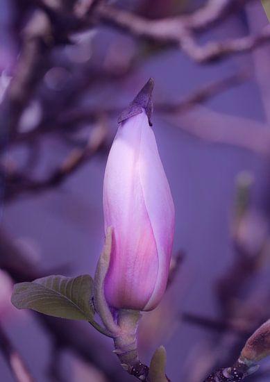 Magnolienknospe  van Rosi Lorz