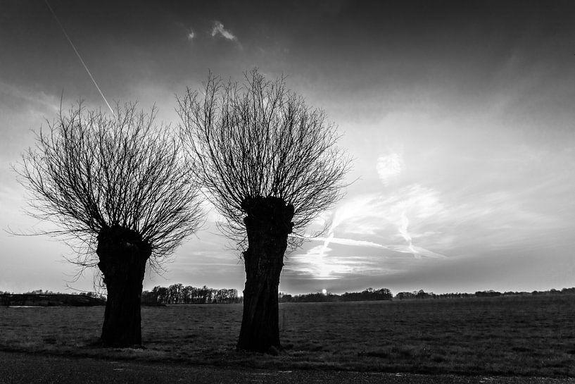 Knotwilgen zwart/wit van Frank Slaghuis