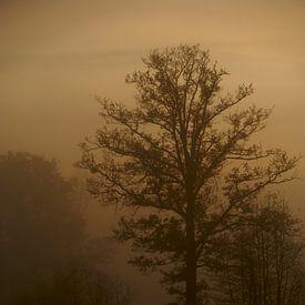 Boom in de mist van Gerjo Radema