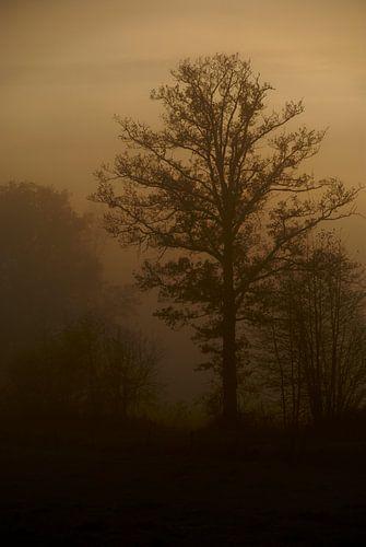 Boom in de mist van