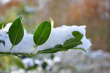 Winter von Henk de Boer