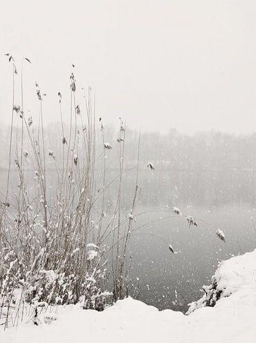 Snowfall At Lake