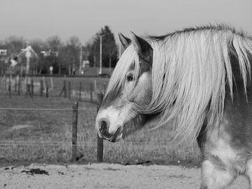 Zwartwit Paard von Anne de Brouwer