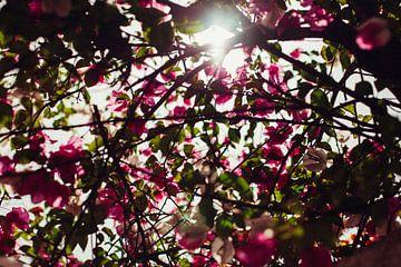 Ein Meer von Blumen von Louise van Gend