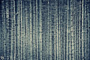 Bomen van Alice Sies