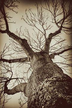 Baum im Winter von Jan van der Knaap