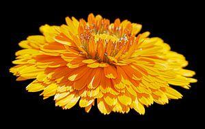 Gele bloem van Masselink Portfolio