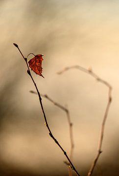 Een herfstblad eenzaam hangend aan een tak van Miranda Palinckx