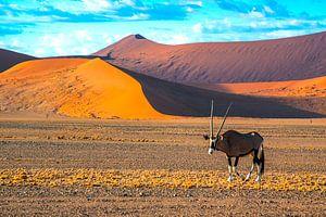 Gemsbok voor de rode duinen in de Sossusvlei, Namibië