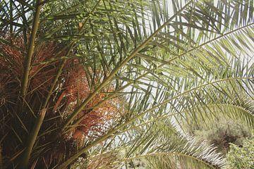Mamaris Turkije palmboom von Lisa Hartjes